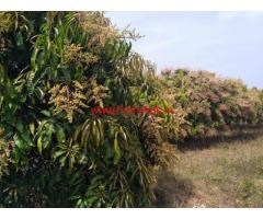 10 acre agricultural land mango farm for sale at Ramanagar
