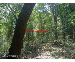 6 Acres newly  planted Coffee Estate for sale at Kodaikanal