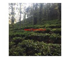 1.5 Acre tea land for sale at Periya, Wayanad