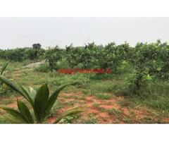 11.50 acres Agriculture Farm for sale near Tenkasi, amuthapuram