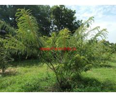 Farm Land for sale near Bangalore at Berigai