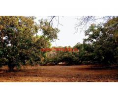 2.10 Acres Mango Farm for sale at Channapatna, close to Highway