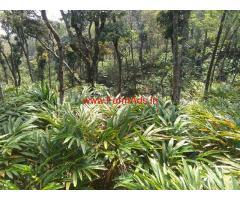 20 Acres Cardamom Estate for sale near Bodi, Close to Munnar NH