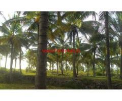 4 Acres Coconut Farm for sale near Bellur Cross - Nagamangala