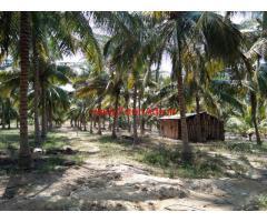 9.25 acre coconut farm for sale in udumalpet