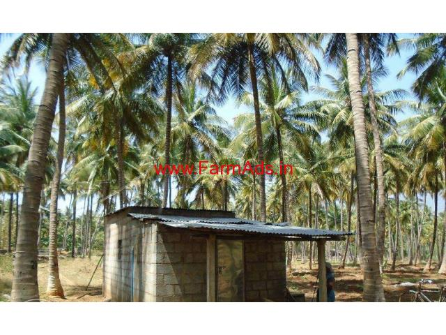 4.5 Acres Coconut farm land for sale in near vathalagundu, dindigul