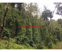 3 Acres Coffee Estate for sale at Bankal - Mudigere