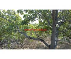 35 acres cashew nut farm for sale at Bangalore Hindupur high way
