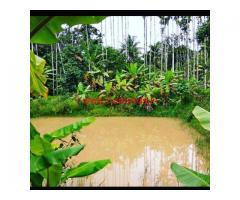 9.18 Acres Coffee Estate for sale at Kodlipete - Coorg