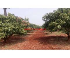 9 Acres Red Soil Mango Farm for sale on MM Hills road