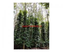 10 acre coffee estate available for sale at chickmaglur