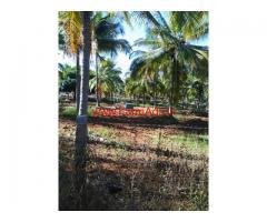 7 Acres Coconut Farm for sale near Bangalore