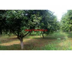 5 Acers mango garden for sale at Rupichala Mandal, Chitoor.