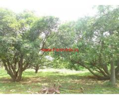 2.5 Acres Mango Farm for sale at Ravikamatham manadal - Vizag